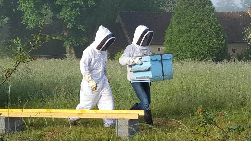 domaine-butineuses-ruche